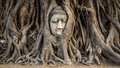 Head of buddha statue in the tree roots ayutthaya thailand at wat mahathat Stock Photo