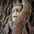 Head of buddha statue in the tree roots ayutthaya thailand at wat mahathat Royalty Free Stock Photos