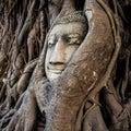 Head of buddha statue in the tree roots ayutthaya thailand at wat mahathat Royalty Free Stock Photos