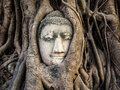 Head of buddha statue in the tree roots ayutthaya thailand at wat mahathat Stock Image