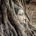 Head of buddha statue in the tree roots ayutthaya thailand at wat mahathat Royalty Free Stock Image