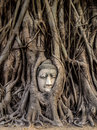 Head of buddha statue in the tree roots ayutthaya thailand at wat mahathat Royalty Free Stock Photography