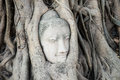 Head of Buddha statue in the tree roots at Wat Mahathat temple, Royalty Free Stock Photo