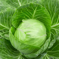 Head of cabbage Royalty Free Stock Photo