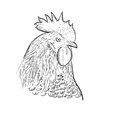 Head of a cock. Rooster black line art sketch of cock.