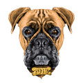 The head of the dog breed boxer dog collar