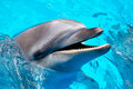 Head of the dolphin blue water Royalty Free Stock Photo