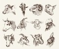 Head of farm animals set vector sketches Stock Image