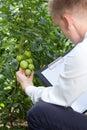 Head of the garden controlling tomatoes condition closeup Royalty Free Stock Photos