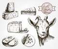 Head of a goat. Goat cheese. Set of sketches on a gray