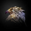 The head of a hawk on a black background Royalty Free Stock Photo
