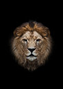 The head of a lion Royalty Free Stock Photo