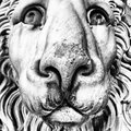 Head of marble lion magnificent old Stock Photos