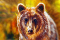 Head of mighty brown bear, oil painting on canvas and graphic collage. blurred background. Eye contact.