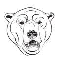 Head of a polar bear Royalty Free Stock Photo