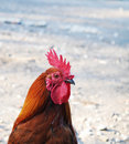 Head of red rooster Stock Photography