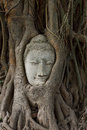 Head of sandstone buddha in the bodhi tree roots Stock Images