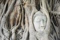 Head of sandstone buddha in tree root at wat mahathat temple ayutthaya thailand Stock Image