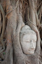 Head of Sandstone Buddha in The Tree Roots Stock Photos