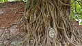 Head of sandstone buddha in the tree roots at wat mahathat ayutthaya thailand Royalty Free Stock Image