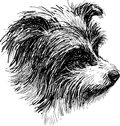 Head of shaggy dog Stock Photography