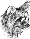 Head of shaggy dog vector drawing the a cute Stock Photos