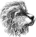 Head of shaggy dog vector drawing the the funny Royalty Free Stock Photos
