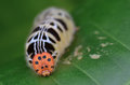 Head shot of a Colorful Caterpillar