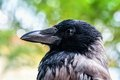 Head shot of a crow in montenegro Stock Photo
