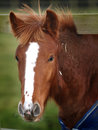 Head Shot Of Foal In A Winter Rug Stock Photography