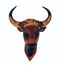 Head skull head animal wild cow on white background Stock Images