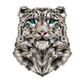 Head of the snow leopard