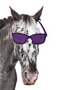 Head of a spotted horse with sunglasses. Royalty Free Stock Photo