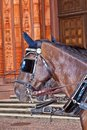 Head of stagecoach horses in detail Royalty Free Stock Photography