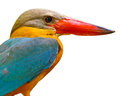 Head of Stork-billed Kingfisher Royalty Free Stock Photo