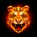 Head of a tiger in flame tongues illustration on black Stock Photos