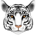 A head of a tiger illustration on white background Stock Photography
