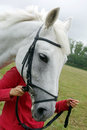 Head of white horse which lead the bridle Stock Photos