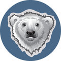 Head white polar bear Royalty Free Stock Photo