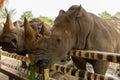 Head white rhino Royalty Free Stock Photo