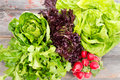 Heads of assorted fresh lettuce with radishes Royalty Free Stock Photo