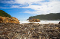 The heads beach covered in driftwood at bay opening of in knysna eastern cape south africa Royalty Free Stock Photo