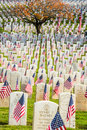Headstones with American Flags in War Veterans Cemetery Royalty Free Stock Photo