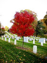 Headstones at arlington national cemetery a photo of grave markers in washington d c serene autumn photo Royalty Free Stock Image