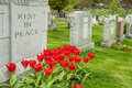 Headstones in a cemetary with red tulips and rest peace inscription Royalty Free Stock Images