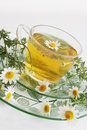 Healing drink herbal tea of chamomile drug Royalty Free Stock Photo
