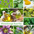 Healing herbs collage of and essential oils Royalty Free Stock Photography