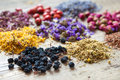 Healing herbs, herbal tea assortment and healthy berries Royalty Free Stock Photo