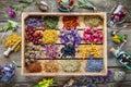 Healing Herbs In Wooden Box, H...