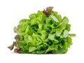 Healthful bright green lettuce, isolated on a white background. Organic, raw, fresh and tasty concept. Royalty Free Stock Photo